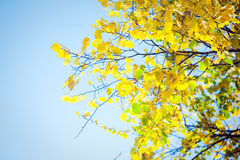 Autumn leaves with sunlight Stock Image