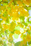 Autumn leaves with sunlight Stock Images