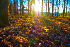 Autumn leaves in sunlight Stock Photography