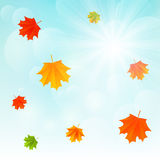 Autumn leaves on sunny background Royalty Free Stock Photo