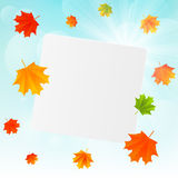Autumn leaves on sunny background Royalty Free Stock Photos