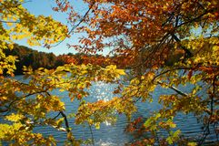 Autumn leaves on a sunny day Royalty Free Stock Photo