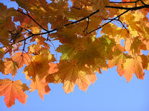 Autumn leaves on a sunny day Royalty Free Stock Images