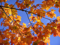 Autumn leaves on a sunny day Stock Photo