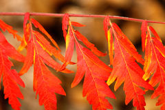 Autumn leaves. On a sunny day Stock Image