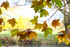 Autumn Leaves Sunny Fall Landscape Colorful Foliage Background Stock Photo