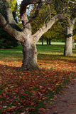 Autumn Leaves Sunny Fall Landscape Colorful Foliage Background Royalty Free Stock Images