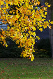 Autumn Leaves Sunny Fall Landscape Colorful Foliage Background Royalty Free Stock Photography