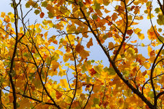 Autumn Leaves Sunny Fall Landscape Colorful Foliage Background Royalty Free Stock Photos
