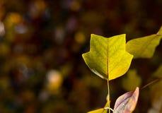 Autumn Leaves Sunny Fall Landscape Colorful Foliage Background Stock Photos