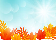 Autumn leaves on sunny sky Royalty Free Stock Images