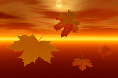 Autumn leaves and sunrise Stock Photography