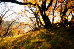 The autumn leaves sunrise Royalty Free Stock Photo