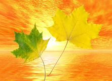 Autumn leaves. Sunset Stock Image