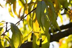 Autumn Leaves Sunset Photos libres de droits