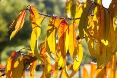 Autumn Leaves Sunset Images libres de droits