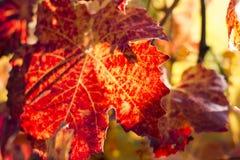 Autumn Leaves Sunset Photographie stock