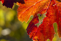 Autumn Leaves Sunset Images stock