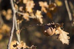 Autumn Leaves Sunset Photos stock