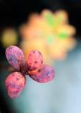 Autumn leaves in sunset light Stock Photos