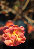 Autumn leaves in sunset light Royalty Free Stock Photos