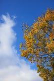Autumn leaves on sunshine background Stock Photos