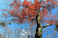Autumn leaves on sunshine background Royalty Free Stock Image