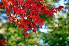 Autumn leaves on sunshine background Stock Image