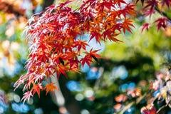 Autumn leaves on sunshine background Stock Images