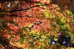 Autumn leaves on sunshine background Stock Photo