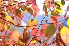 Autumn leaves in the sunshine stock photos