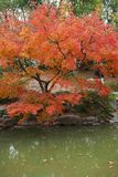 Autumn maple leaves beside the water. Plant, outdoor. royalty free stock photography
