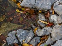 Autumn Leaves sur des roches dans l'étang Photos stock