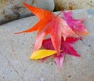 Autumn Leaves sur une roche Images stock