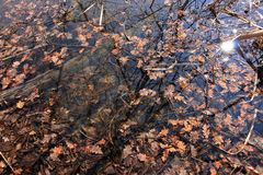 Autumn leaves on the surface of the water Royalty Free Stock Images