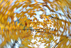 Autumn Leaves Swirl Stock Images