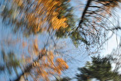Autumn Leaves Swirl Stock Image