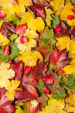 Autumn leaves on table Stock Photography