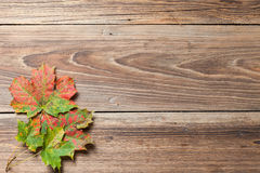 Autumn leaves on table Stock Images