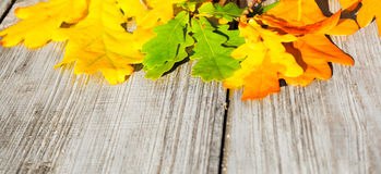 Autumn leaves on a table royalty free stock photo