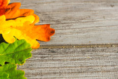 Autumn leaves on a table Royalty Free Stock Photography