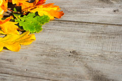 Autumn leaves on a table Royalty Free Stock Image