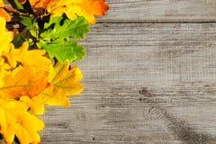 Autumn leaves on a table Stock Photos