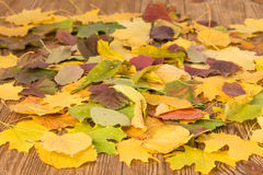 Autumn leaves on the table Royalty Free Stock Images