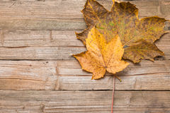 Autumn leaves on a table. Yellow leaves on a borwn wooden table in autumn Royalty Free Stock Images