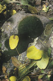 Autumn Leaves, Telluride, Colorado Stock Images