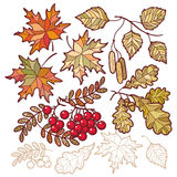Autumn leaves. Template for a designer Royalty Free Stock Photography