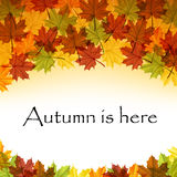 Autumn leaves text frame eps 10 Royalty Free Stock Images