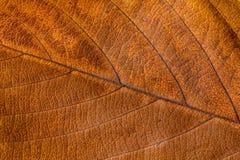 Autumn Leaves Textura das folhas de outono Fundo das folhas Fotografia de Stock