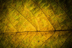 Autumn Leaves Textura das folhas de outono Fundo das folhas Imagem de Stock Royalty Free